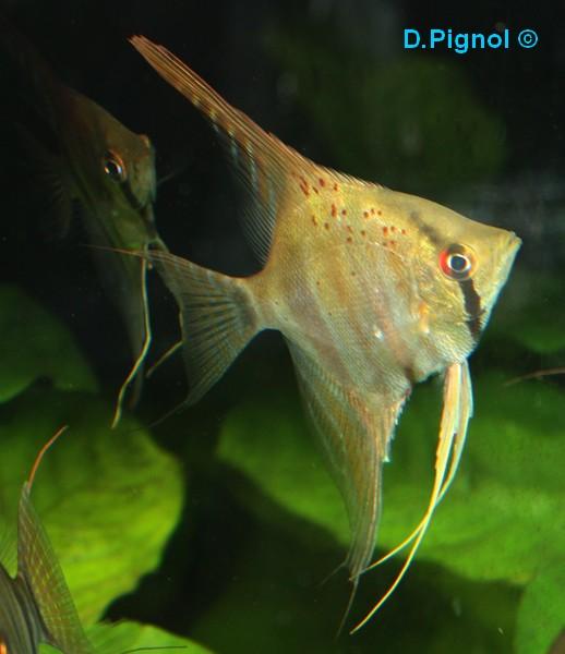 http://aquariophilie.cowblog.fr/images/Divers/IMG2037.jpg
