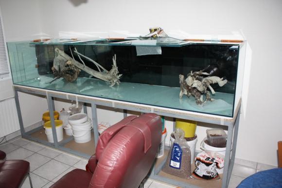 http://aquariophilie.cowblog.fr/images/Divers/grand17.jpg