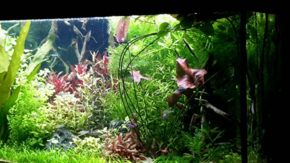 http://aquariophilie.cowblog.fr/images/img20170416220702.jpg
