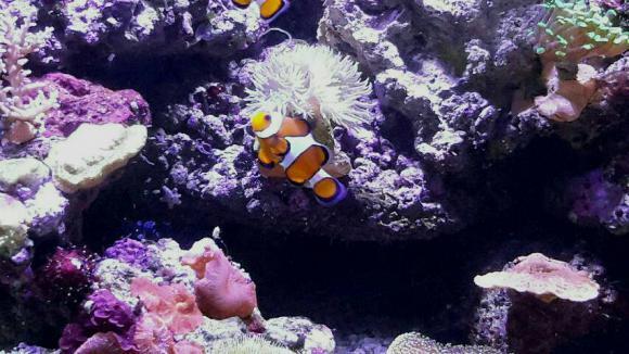 http://aquariophilie.cowblog.fr/images/img20171015130025.jpg